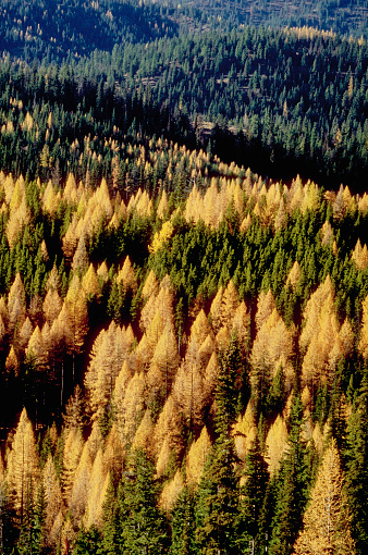 Wenatchee National Forest「Firs and Larches」:スマホ壁紙(10)