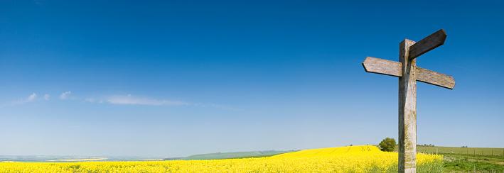 Decisions「Blank sign, yellow crop, blue sky」:スマホ壁紙(17)