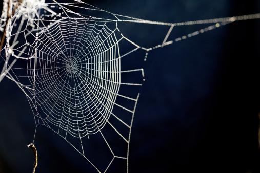 Spider Web「spider web. XXXL」:スマホ壁紙(5)