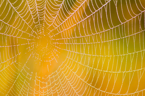 Spider Web「Spider web with colorful background」:スマホ壁紙(11)