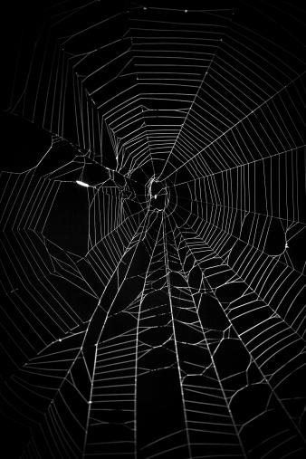 Spider Web「spider web」:スマホ壁紙(8)