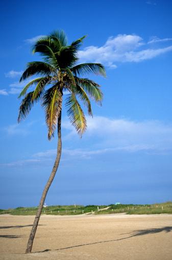 Miami Beach「South Beach, Miami Beach, Florida, USA」:スマホ壁紙(4)