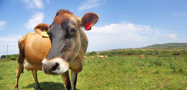 Cow stood in green field on sunny day:スマホ壁紙(壁紙.com)