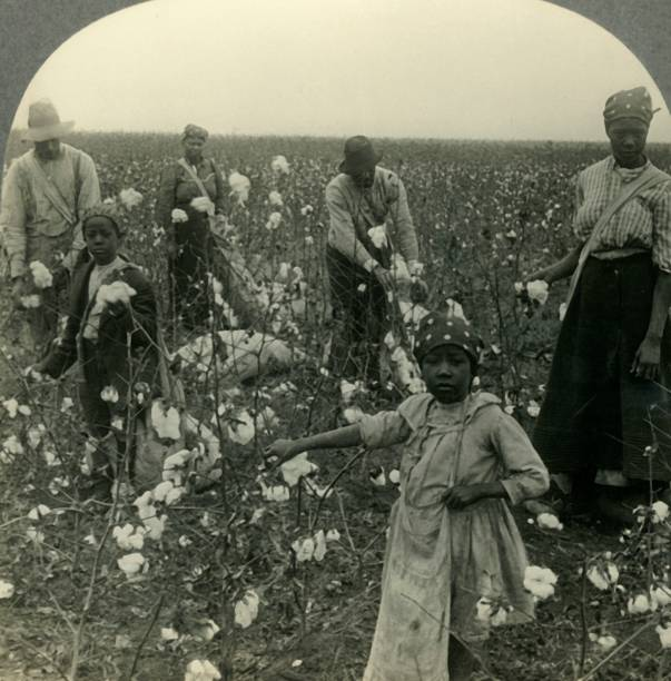 A Typical Texas Cotton Field At Picking Time:ニュース(壁紙.com)