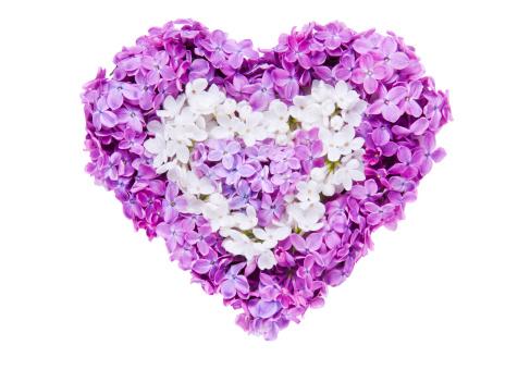 花頭「ライラックの花の形愛」:スマホ壁紙(3)