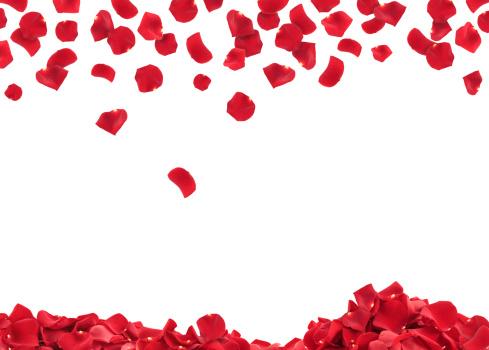 バレンタイン「バラの花びら」:スマホ壁紙(7)