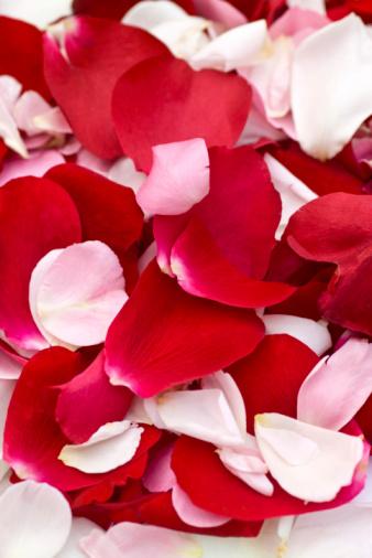 薔薇「バラの花びら」:スマホ壁紙(11)