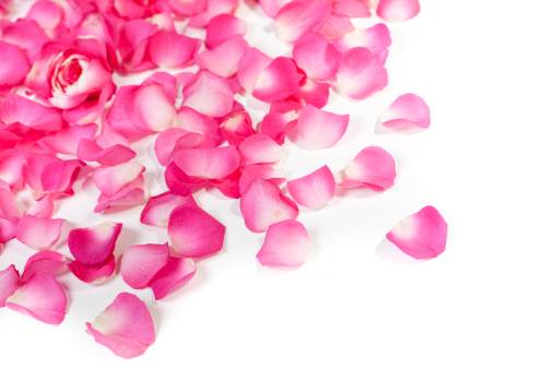 Petal「Rose petals on white」:スマホ壁紙(15)