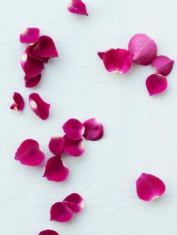 花びら「Rose petals」:スマホ壁紙(16)
