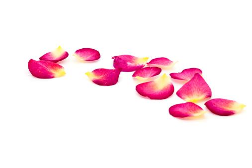 バラの花びら「バラの花びら」:スマホ壁紙(16)
