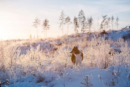 Border Collie「Winter hike」:スマホ壁紙(10)