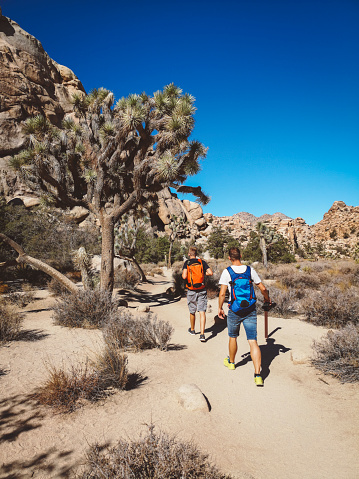 Hiking「Two male hikers passing by a joshua tree in Joshua tree national park」:スマホ壁紙(18)