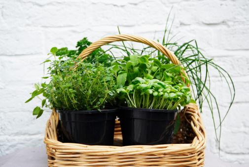 Lemon Thyme「Basket of herbs against white wall background」:スマホ壁紙(16)