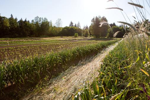 Empty「Crops in a field」:スマホ壁紙(5)