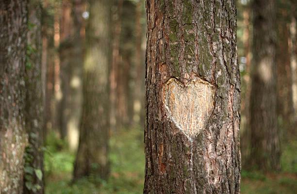 Pine Heart:スマホ壁紙(壁紙.com)