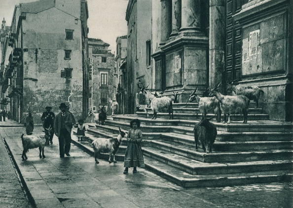 Church「Goats on the steps of the Cathedral, Palermo, Sicily, Italy」:写真・画像(5)[壁紙.com]