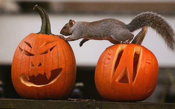 A Squirrel Stands On A Halloween Jack-O'-Lantern:ニュース(壁紙.com)