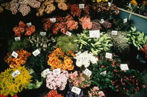 Flower Shop「Flowers in market, Amsterdam, Holland, elevated」:スマホ壁紙(2)