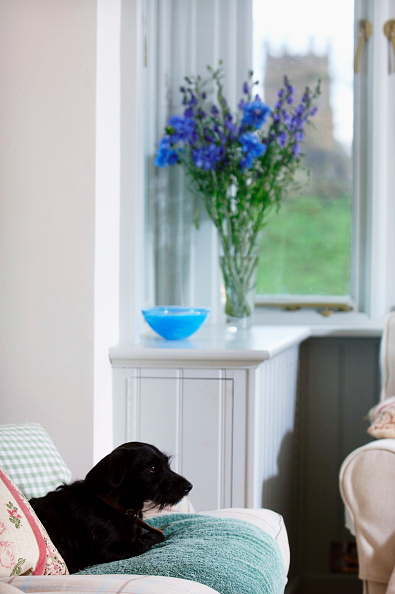 No People「Flowers in a vase on the window board of a house with views of a village church UK」:写真・画像(16)[壁紙.com]