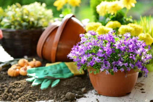 Planting「flowers in the garden」:スマホ壁紙(12)