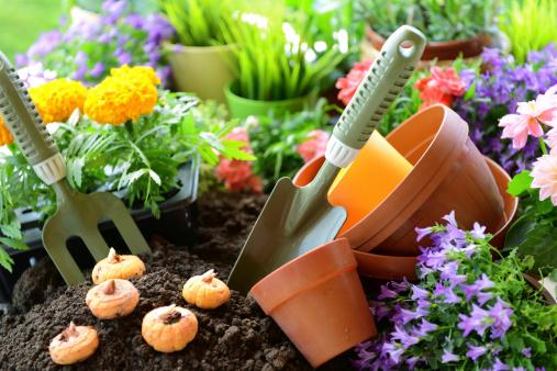 Plant Bulb「flowers in the garden」:スマホ壁紙(10)