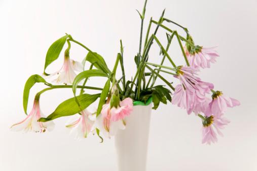 カーネーション「Flowers in vase wilting」:スマホ壁紙(8)