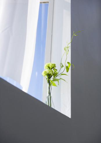 カーネーション「Flowers in vese by window」:スマホ壁紙(15)