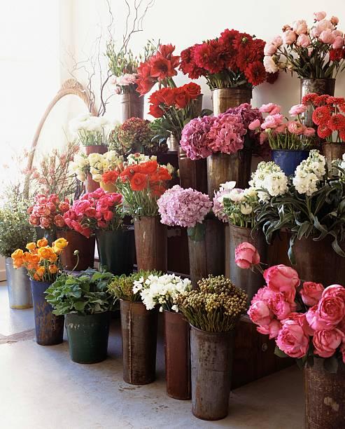 Flowers in flower shop:スマホ壁紙(壁紙.com)
