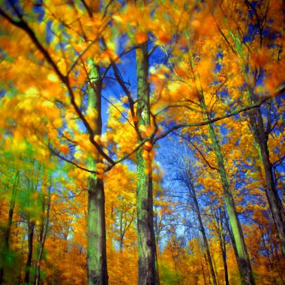 サトウカエデ「Autumn, Quebec」:スマホ壁紙(3)
