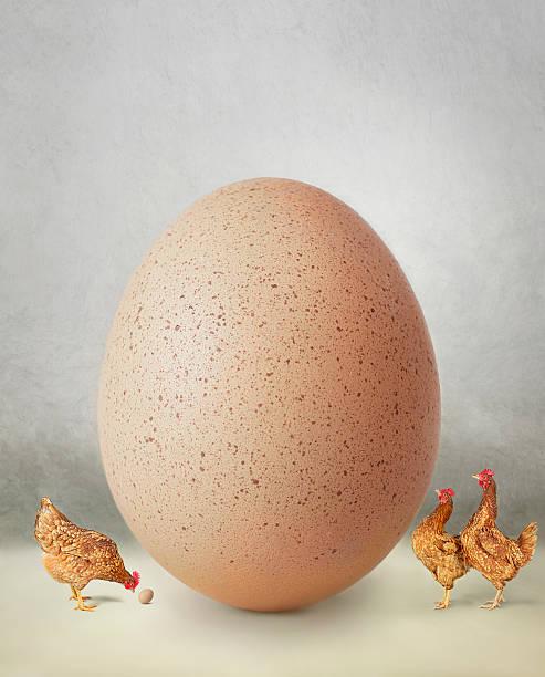 Chicken and giant egg:スマホ壁紙(壁紙.com)