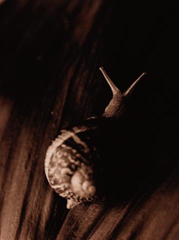 snails「Snail on Wood」:スマホ壁紙(2)