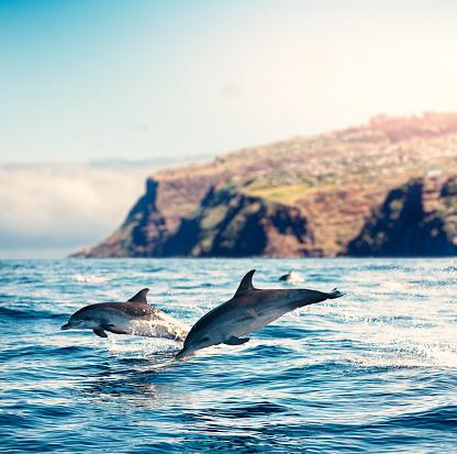 Madeira「Madeira Island Dolphins」:スマホ壁紙(9)