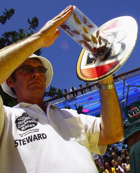 ゴキブリ「World Championship Cockroach Racing」:写真・画像(11)[壁紙.com]