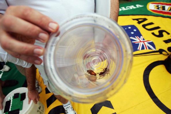 ゴキブリ「Australia Day Feature - Cockroach Racing」:写真・画像(8)[壁紙.com]