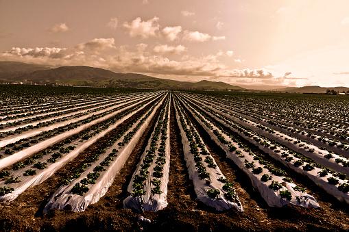 Salinas - California「Salinas Valley Springtime Agriculture」:スマホ壁紙(19)