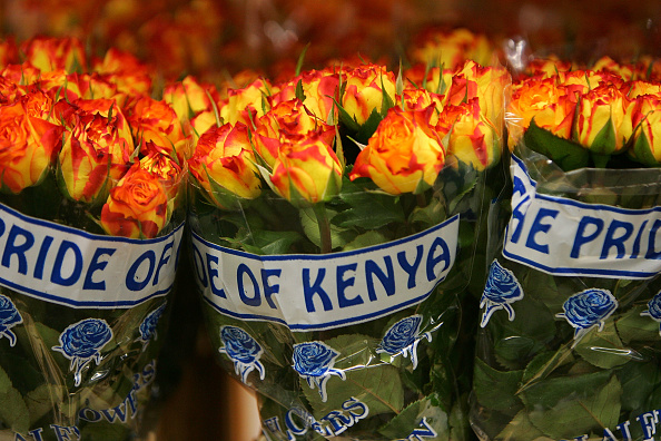 flower「Worlds Largest Flower Auction Prepares For Valentines Day」:写真・画像(14)[壁紙.com]