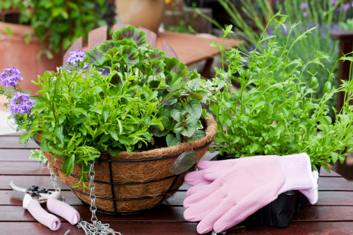 Protective Glove「Gardening summer bedding plants」:スマホ壁紙(3)