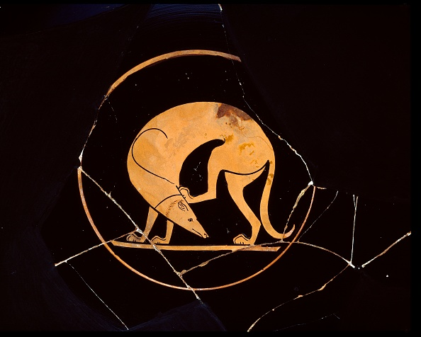 Ear「Attic Red-Figure Cup Of Dog Scratching His Ear With A Hindleg」:写真・画像(18)[壁紙.com]