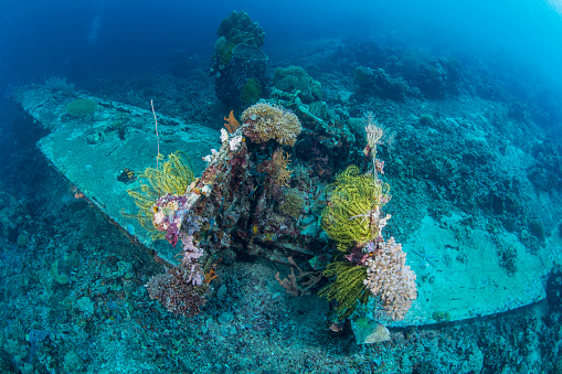 Soft Coral「Airplane wreck sitting atop reef, overgrown with soft coral and crinoids.」:スマホ壁紙(0)