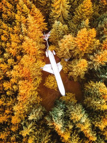 季節「森での飛行機事故」:スマホ壁紙(12)