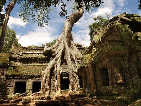 Ta Prohm Temple「Ta Prohm temple detail in Angkor Wat」:スマホ壁紙(17)