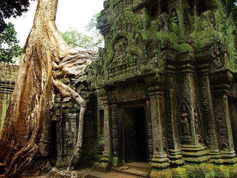 Ta Prohm Temple「Ta Prohm temple detail in Angkor Wat」:スマホ壁紙(13)