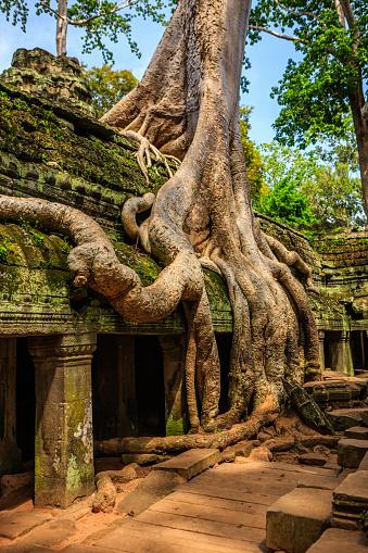 Ta Prohm Temple「Ta Prohm temple near Angkor Wat, Cambodia」:スマホ壁紙(11)