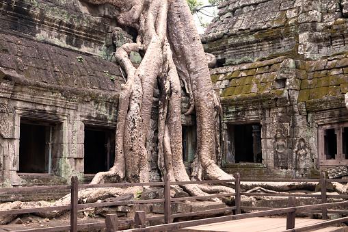 Ta Prohm Temple「Ta Prohm Temple, Angkor, Cambodia」:スマホ壁紙(14)