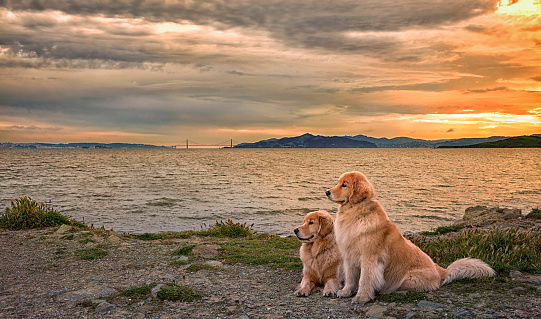 Water's Edge「Dogs relaxing on beach at sunset」:スマホ壁紙(13)