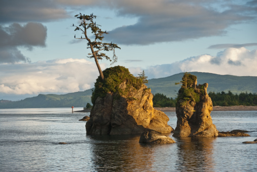 Oregon Coast「Lone Tree on a Rock at Sunset」:スマホ壁紙(15)