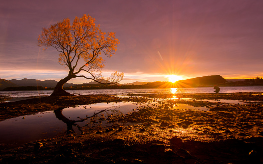 New Zealand「Lone Tree of Lake Wanaka」:スマホ壁紙(15)