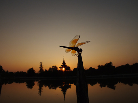 とんぼ「Mandalay Myanmar Royal Palace sunset dragonfly」:スマホ壁紙(15)