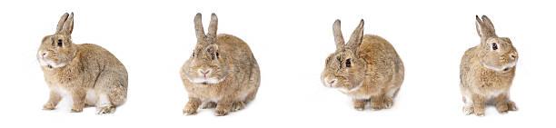 Easter rabbit isolated:スマホ壁紙(壁紙.com)