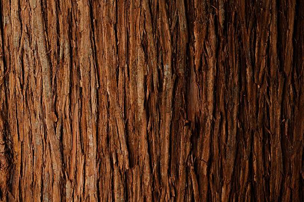 Bark of cedar tree texture background:スマホ壁紙(壁紙.com)